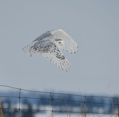 Wildlife Photography Ethics