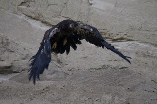 Flying off a sandbank.